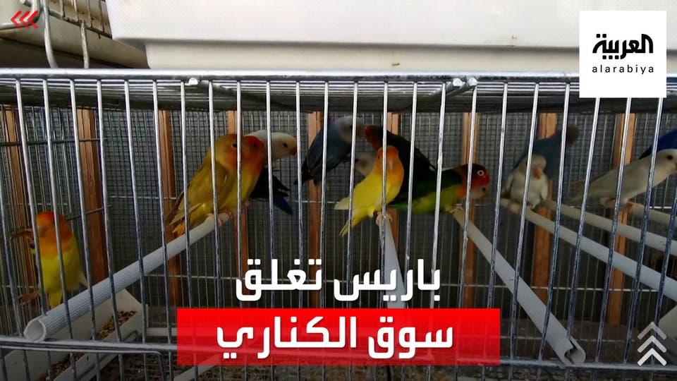باريس تقرر إغلاق أشهر وأقدم سوق للطيور.. وتجاره متخوفون من الإفلاس