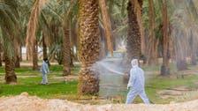 السعودية.. أكثر من 15 ألف عملية لمكافحة الجراد خلال عام