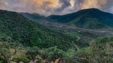سعودی عرب: پہاڑوں پر سبزے کی چادر دیکھنے والوں کے سرور کا ذریعہ
