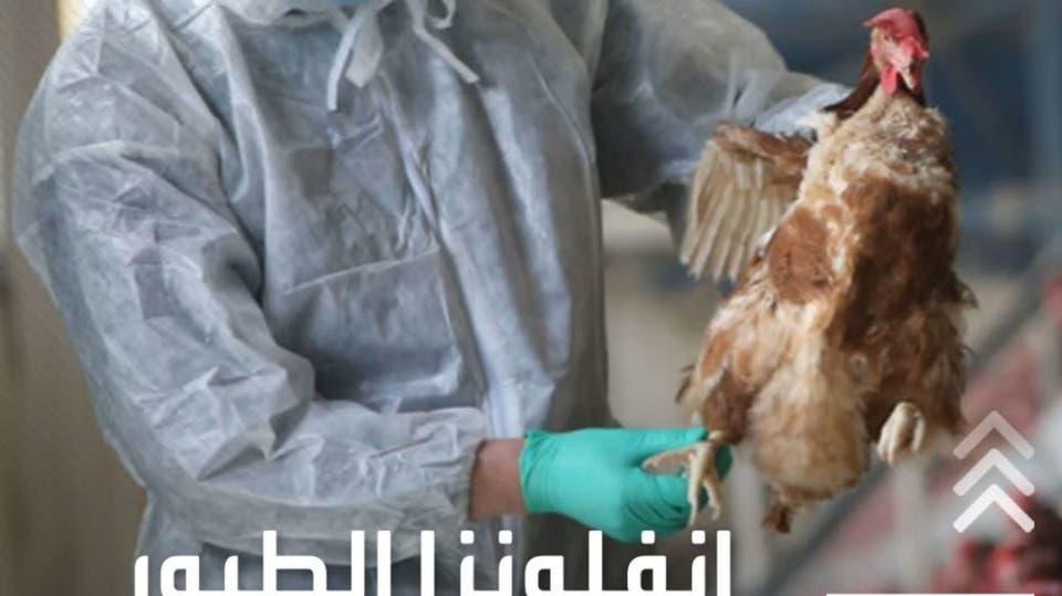 منظمة الصحة العالمية تقلل من خطر إنفلونزا الطيور