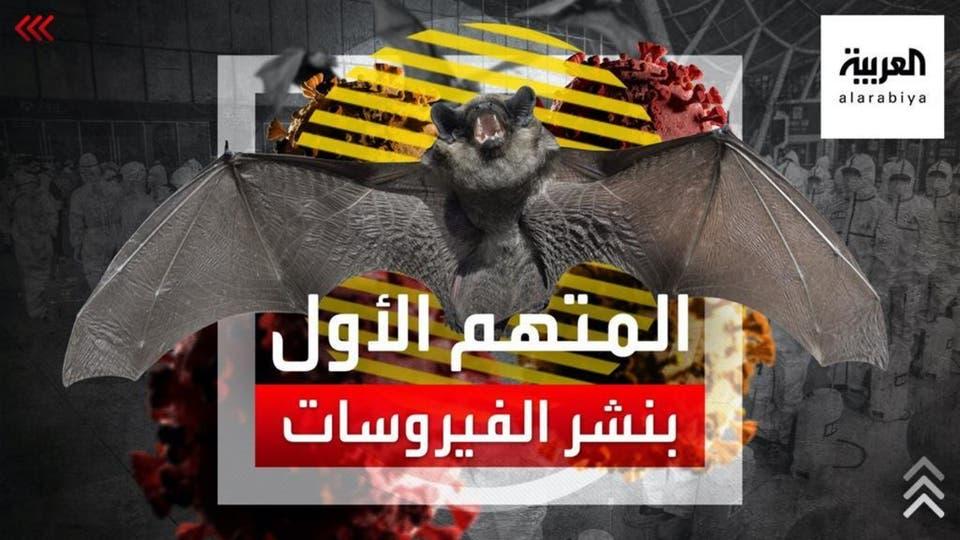 الخفاش.. المتهم الأول بنشر الفيروسات ونقلها إلى الإنسان