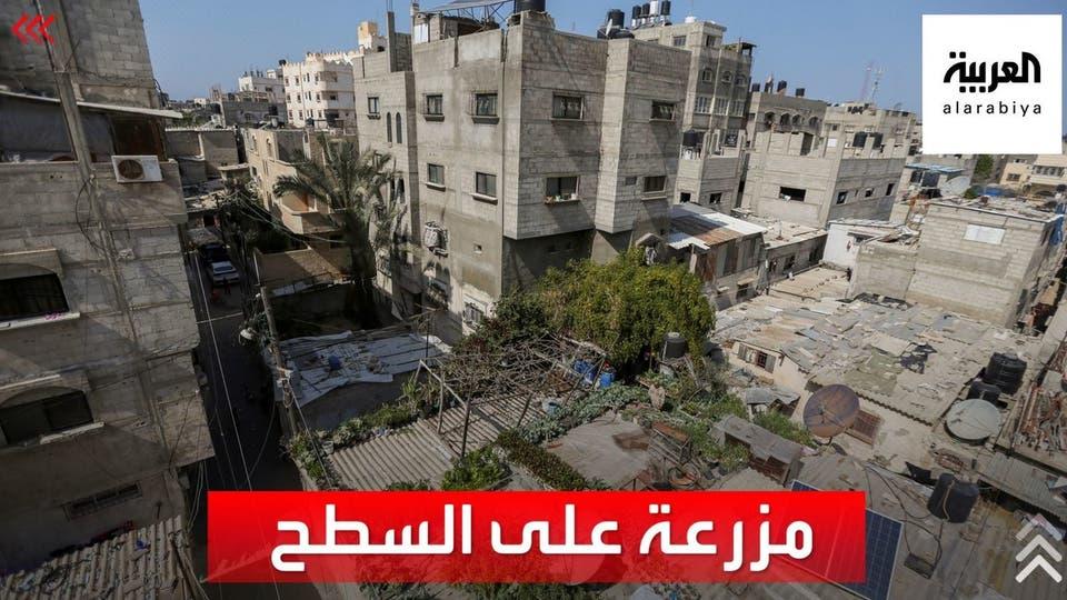 فلسطيني يحارب الفقر من سطح منزله