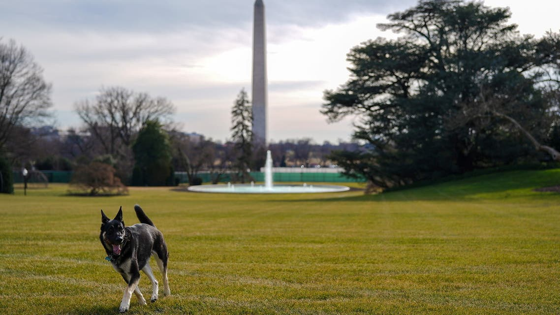 Major, one of the family dogs of US President Joe Biden and First Lady Jill Biden, explores the South Lawn. (Reuters)