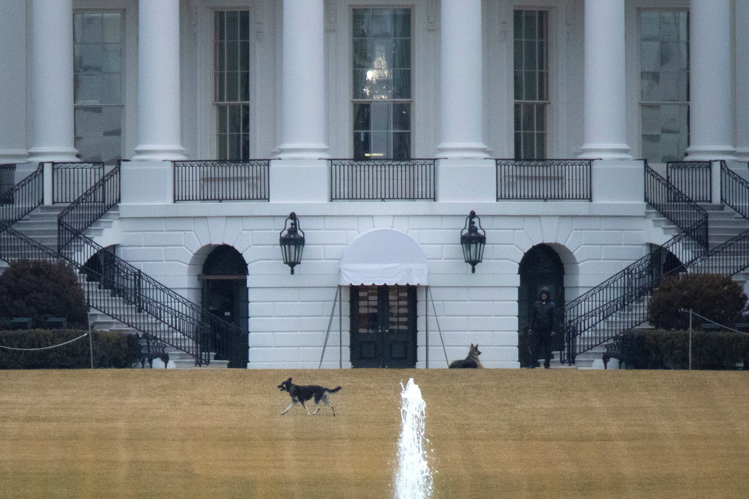 US President Joe Biden's dogs Champ and Major, known as the First Dogs, are seen on the South Lawn at the White House in Washington, US. (Reuters)