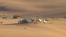 سعودی عرب کا 10 اعشاریہ 42 فی صد رقبہ قدرتی مقامات اور جنگی حیات کے لیے مختص
