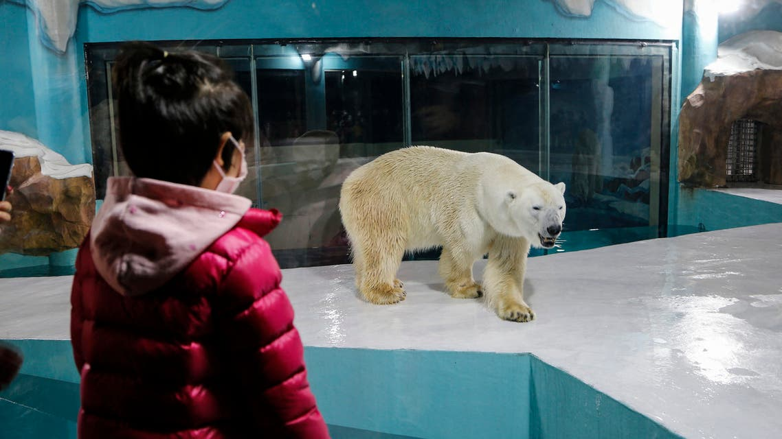 A child looks at a polar bear inside an enclosure at a newly-opened hotel, which allows guests views of the animals - listed as a vulnerable species by the International Union for Conservation of Nature (IUCN) - from rooms on the premises in Harbin, northeastern China's Heilongjiang province, on March 12, 2021. (AFP)