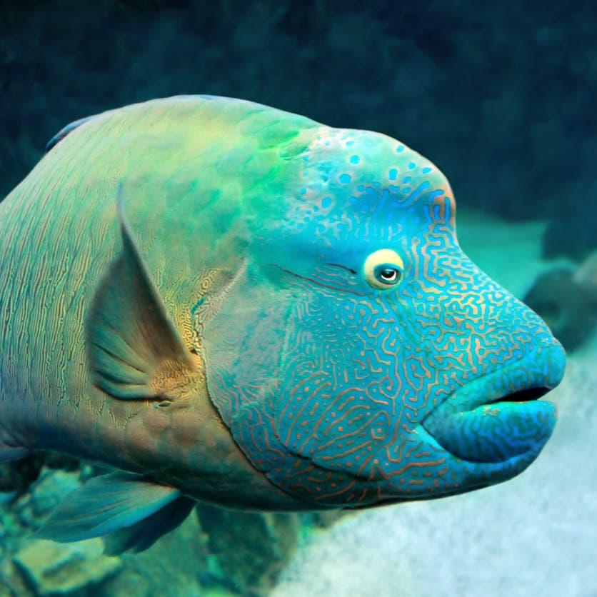 تحول جنسها من أنثى إلى ذكر.. قصة سمكة غريبة في مصر