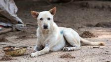 آوارہ کتوں سے حملوں سے انسانوں کو کیسے بچایا جا سکتا ہے
