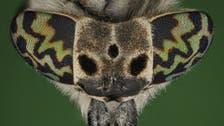 مصور سعودي يبرز جمالية 400 نوع من الحشرات