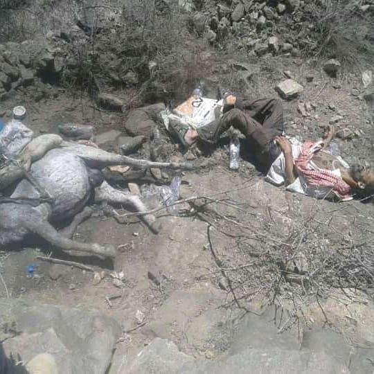 """صورة مؤلمة.. لغم حوثي يقتل مواطنا مع """"حماره"""" في تعز"""
