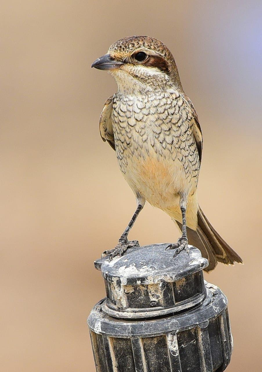 من الطيور التي تم رصدها