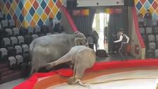 سرکس میں کرتب کے دوران لڑتے ہوئے ہاتھی تماشائیوں پر کود پڑے: ویڈیو