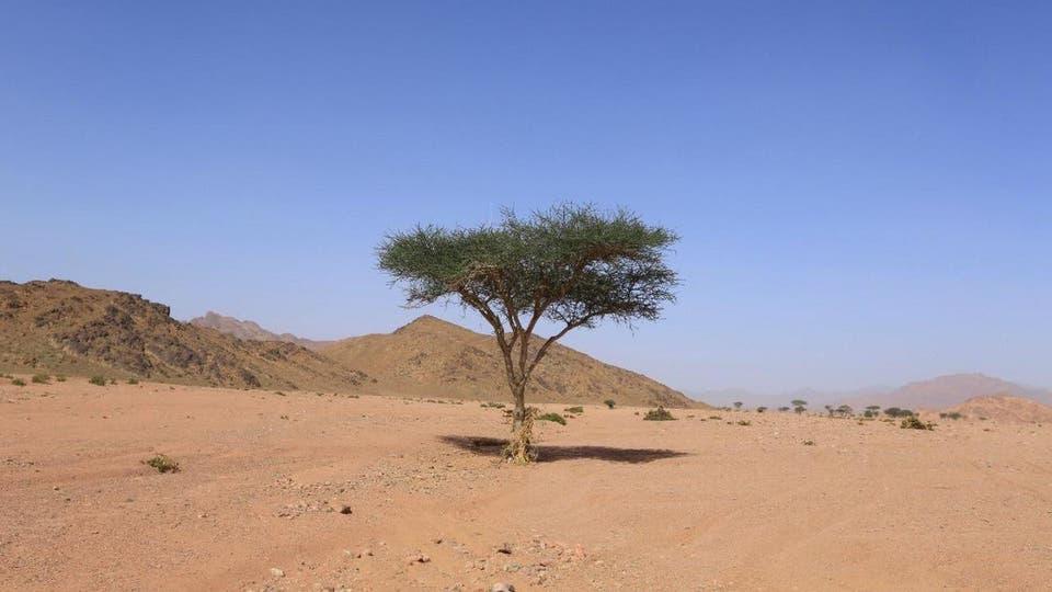 إنقاذ أكثر من 100 شجرة نادرة في مشروع أمالا في السعودية
