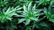 New York State legalizes recreational marijuana use