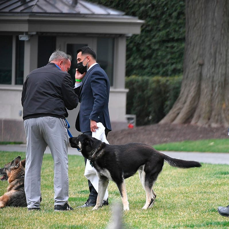 One of US President Biden's dogs leaves poo in White House Diplomatic Reception Room