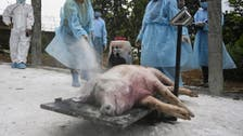 China reports African swine fever outbreak on Xinjiang farm holding 599 pigs