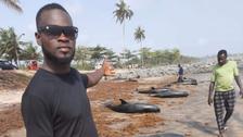 مشاهد مؤثرة.. دلافين نافقة على شواطئ غانا!