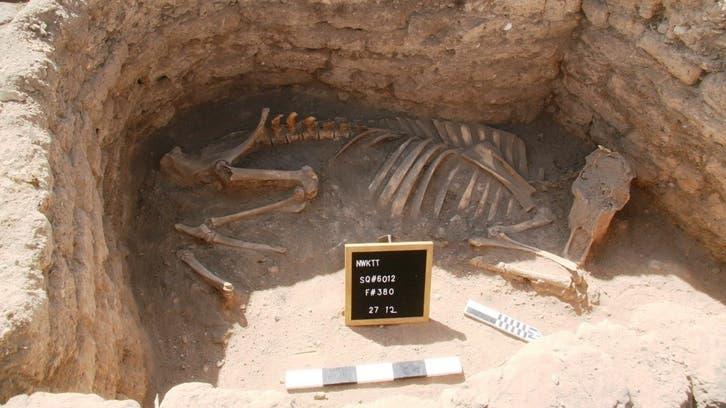 بالصور.. مصر تعلن اكتشاف