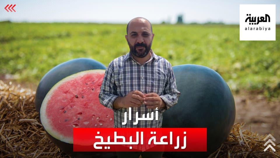 احتفال بموسم البطيخ في غور الأردن وفلسطين.. وأسرار كامنة وراء زراعته