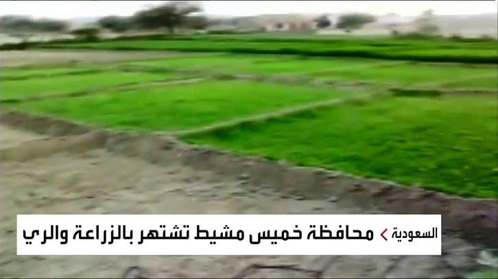 نشرة الرابعة   ٤٠٠٠ مزرعة تتلقى الدعم المتواصل في خميس مشيط