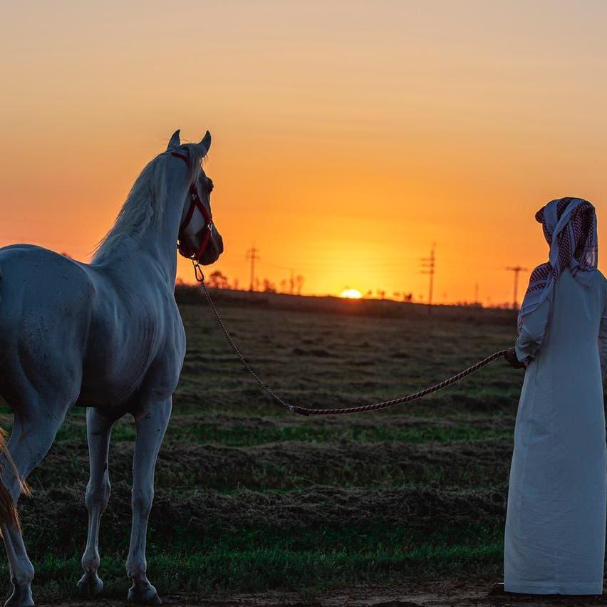"""بالصور.. جمال الخيول العربية توثقه كاميرا """"عاشق الخيل"""""""