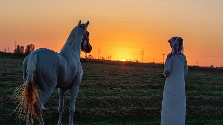 بالصور.. جمال الخيول العربية توثقه كاميرا