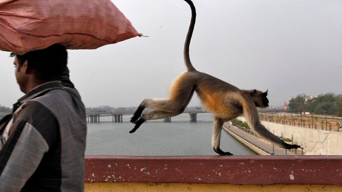 A monkey runs past a man as it crosses a bridge on the Sabarmati river in Ahmedabad. (Reuters)