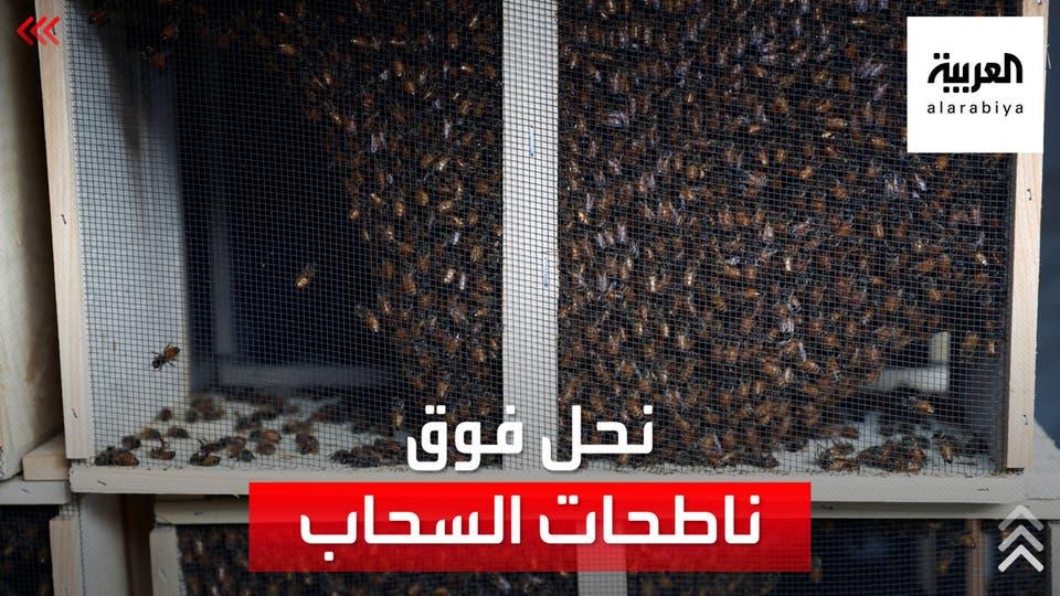 بعيدا عن المزارع.. تربية النحل فوق ناطحات السحاب في نيويورك
