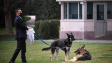 كلب بايدن المشاغب يتلقى تدريبا للتكيف مع حياته بالبيت الأبيض