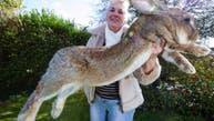 به سرقت رفتن بزرگترین خرگوش جهان در بریتانیا