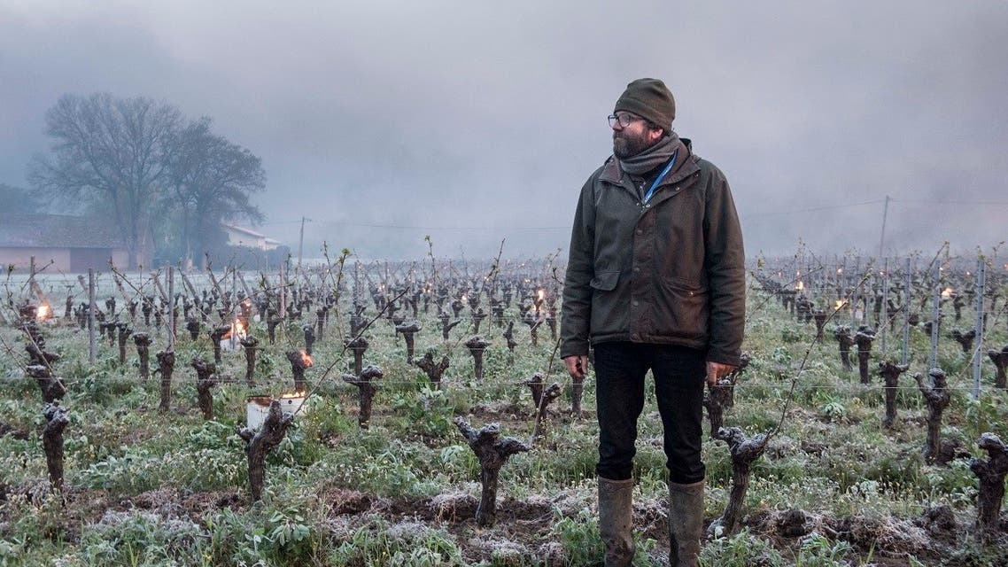 Winegrower Pierre-Marie Luneau checks vines during the burning of anti-frost candles in the Luneau-Papin wine vineyard in western France, April 12, 2021. (AFP)