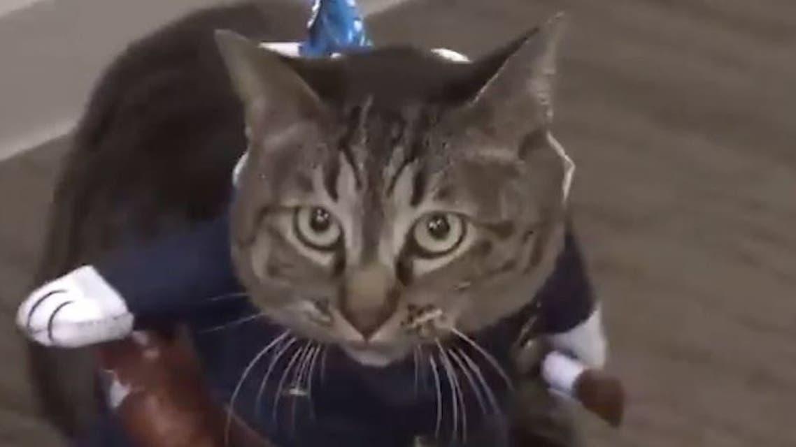 القط كوكو
