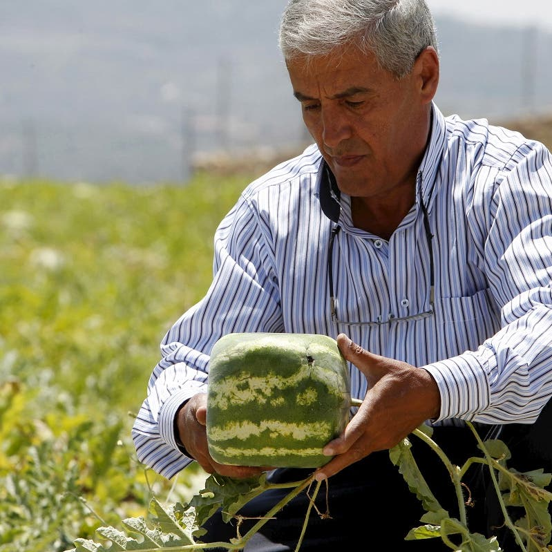Lebanon vows to do more on drug smuggling after Saudi ban on fruit, vegetable imports