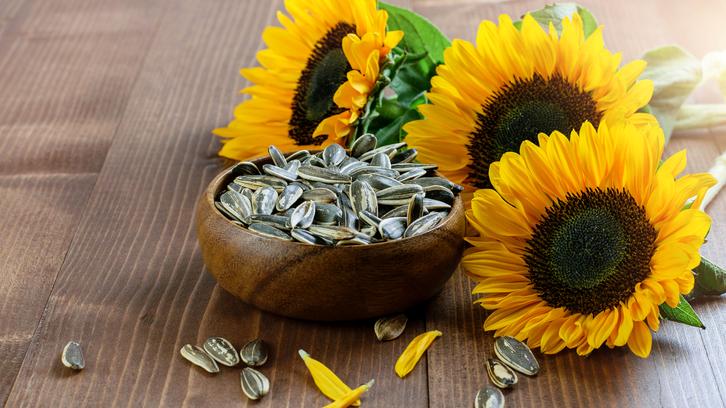 هشدار درباره مصرف بیرویه دانههای آفتابگردان