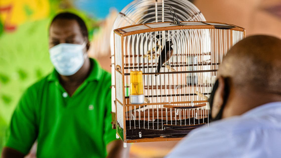 Two jury members sit in the playground of the school Henry Agarande, during a song contest of 'Pikolet' chestnut-bellied seed finch (Sporophila angolensis) birds in Cayenne, in the French overseas department of Guiana, on November 28, 2020. (File photo: AFP)