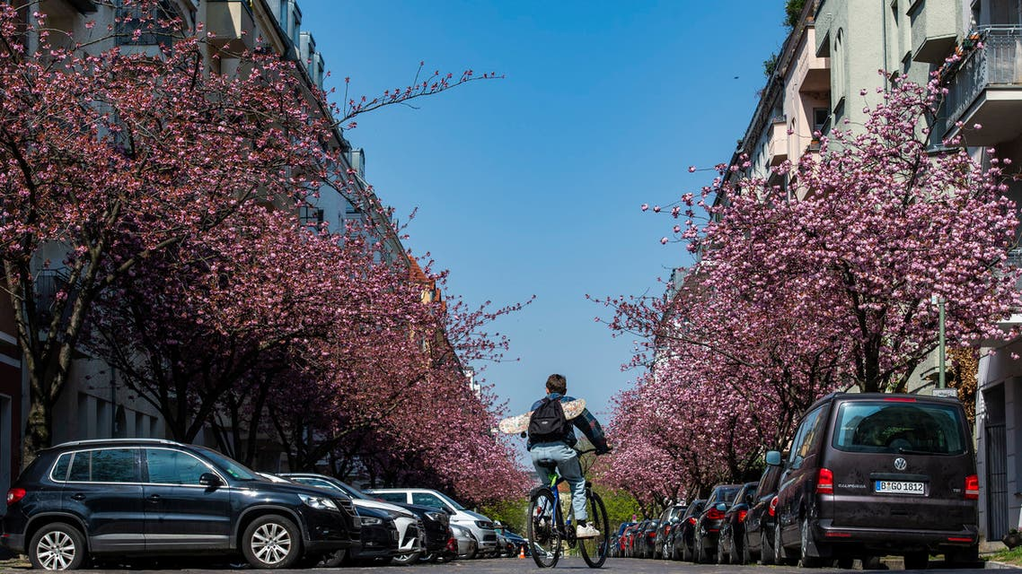 A youth cycles down a street lined with blossoming cherry trees in Berlin on April 28, 2021. (AFP)