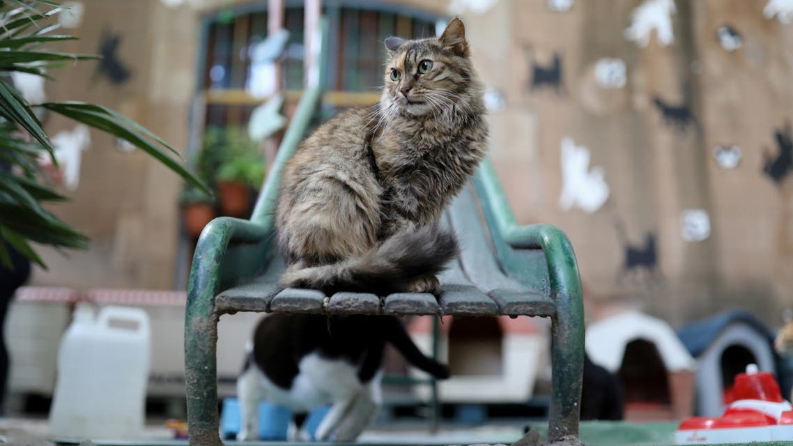 A street-born cat is seen on a slide inside of El Jardinet dels Gats (Cats' Garden), which is a cat shelter in the Raval district, amid the coronavirus disease (COVID-19) outbreak, in Barcelona, Spain October 1, 2020. Picture taken October 1, 2020. (Reuters)