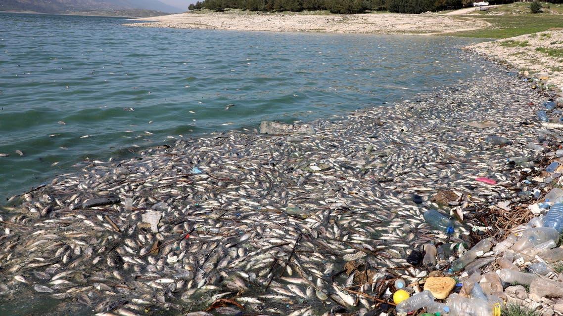 Dead fish are seen floating in Lake Qaraoun on the Litani River, Lebanon April 29, 2021. (Reuters)