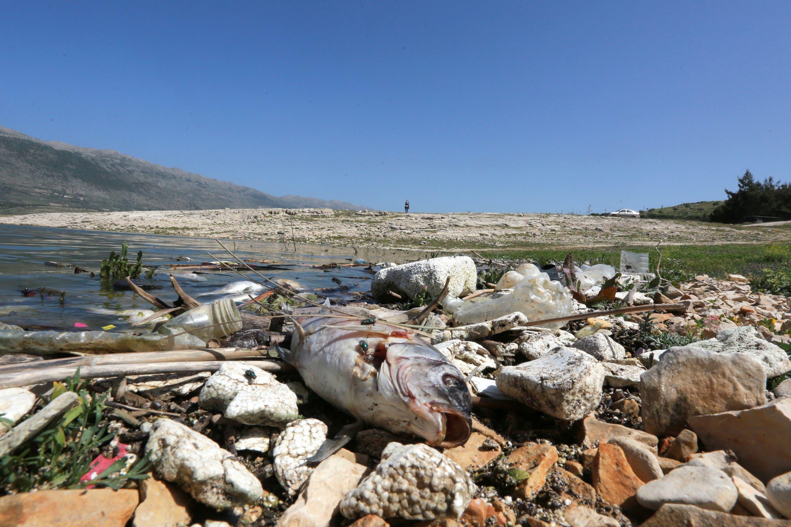 A dead fish is seen at the shore of Lake Qaraoun on the Litani River, Lebanon April 29, 2021. (Reuters)