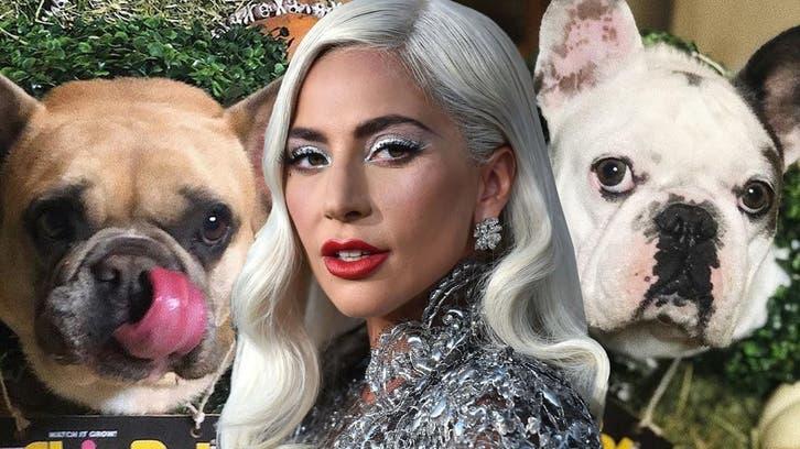 بازداشت سارقان سگهای «لیدی گاگا» ستاره موسیقی آمريكا