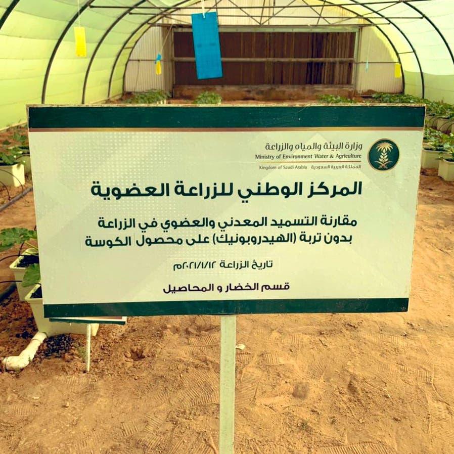 هذا حجم الزراعة العضوية في السعودية!