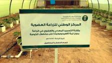 سعودی عرب میں نامیاتی زراعت کا رقبہ 2.7 لاکھ ایکڑ