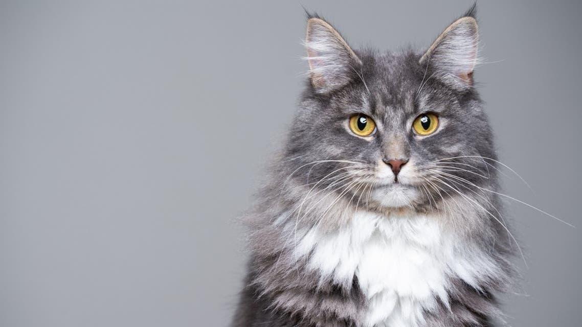 گربه آرشیوی