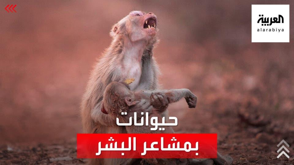 مشاهد لحيوانات تبكي وتفرح مثل البشر