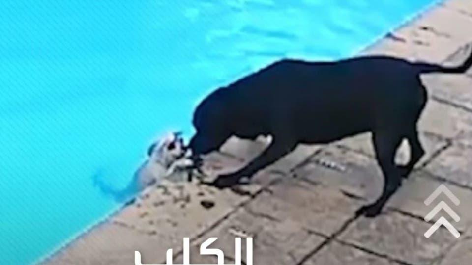 كلب ينقذ صديقه من الغرق