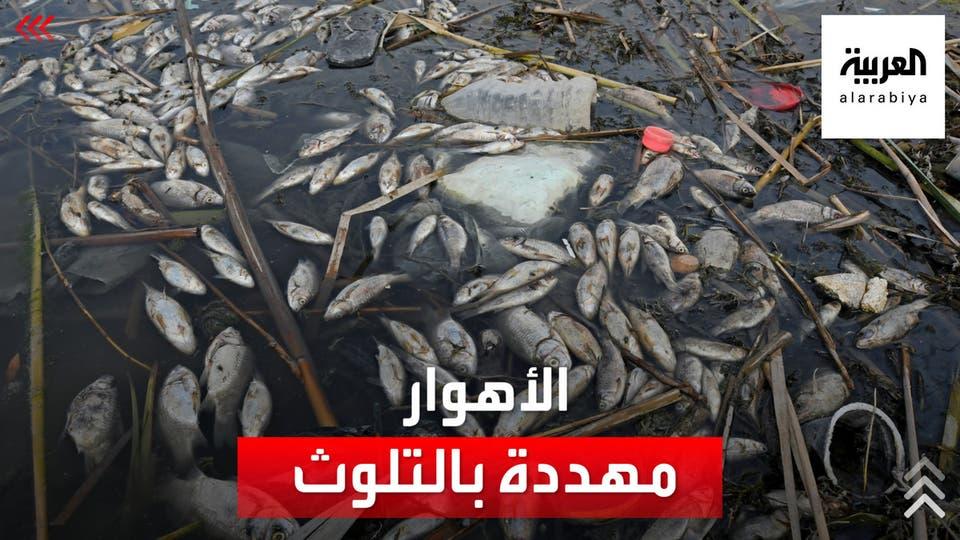 مياه الصرف الصحي تهدد منطقة الأهوار جنوب العراق