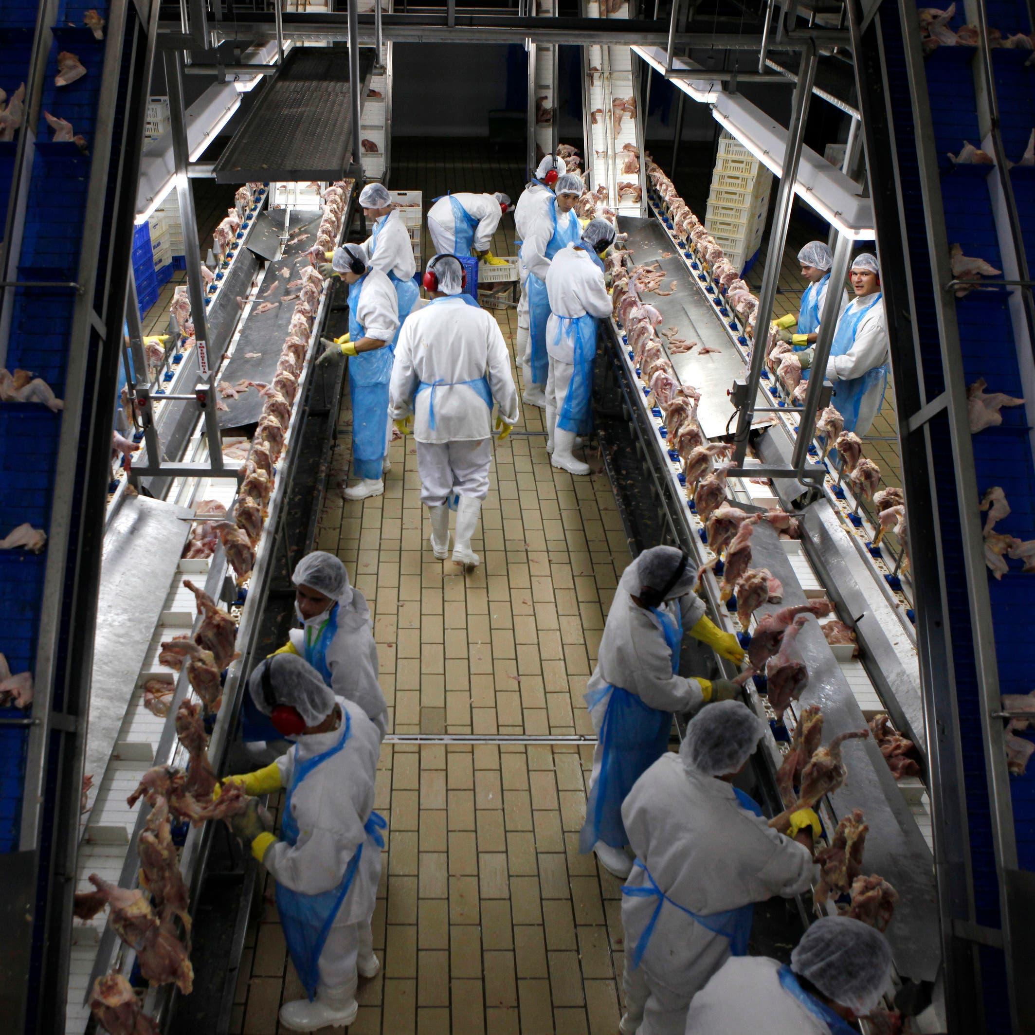 في خطوة مفاجئة.. السعودية تحظر الاستيراد من مصانع للدواجن في البرازيل