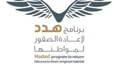 باليوم العالمي للطيور المهاجرة.. جهود سعودية لإعادة الصقور لمواطنها