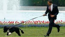 Former US President Obama's family dog Bo has died
