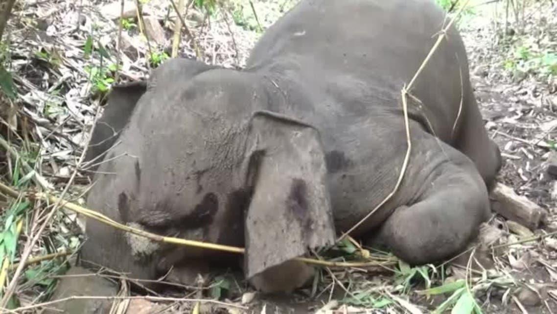 Lightning kills 18 elephants in India's Assam state. (Reuters)